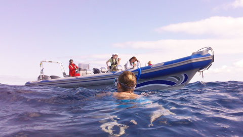 swimming with dolphins in madeira